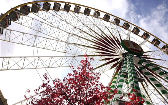 Wallpaper Ferris wheel, red maple leaves