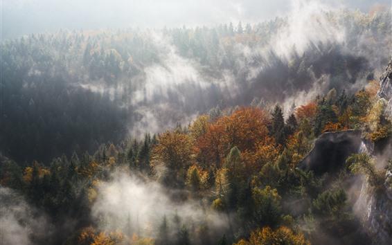 Обои Лес, деревья, осень, туман, утро, солнечные лучи