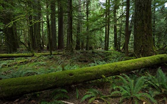 Обои Лес, деревья, мох, зелень