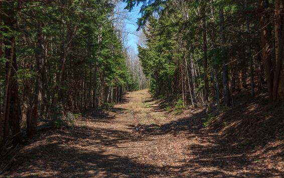 Обои Лес, деревья, тропинка, тень
