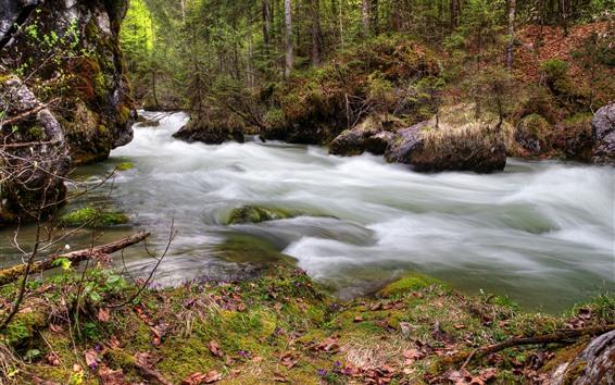 Обои Лес, деревья, река, ручей, мох