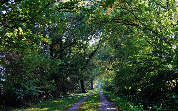 Wallpaper Forest, trees, trail, sunshine