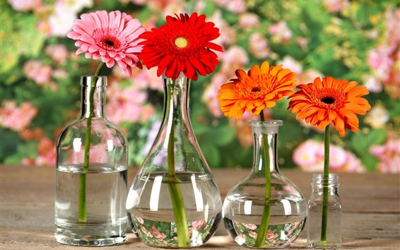 Wallpaper Gerbera, flowers, orange, yellow, red, glass bottles