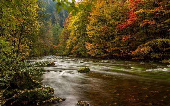 Обои Германия, деревья, река, осень, природа, пейзажи