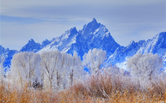 Wallpaper Grand Teton National Park, mountains, trees, snow, winter, USA