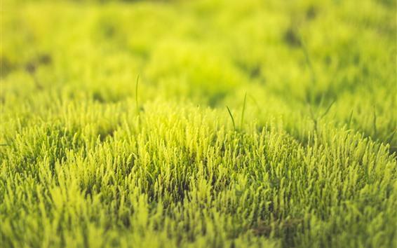 Wallpaper Grass, green, spring