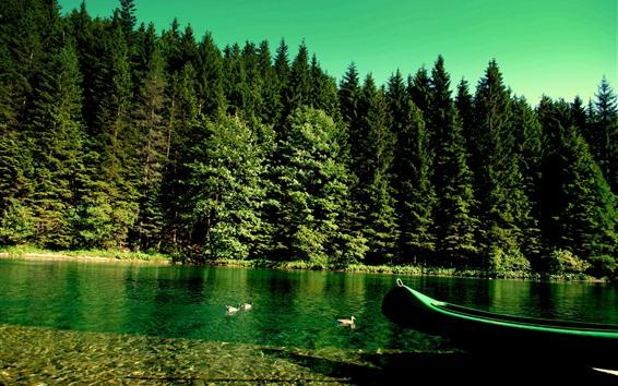 Обои Зеленые деревья, утка, озеро, лодка