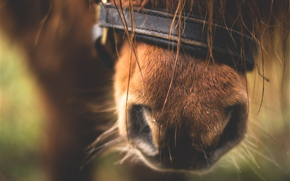 壁紙 馬の鼻