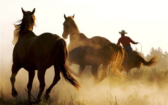 Обои Лошади бегут, трава, туман, утро