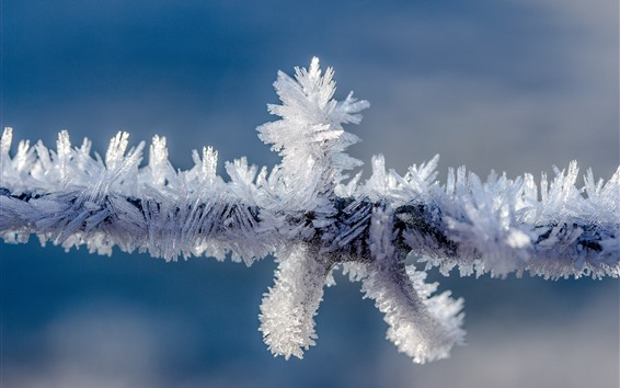 Papéis de Parede Cristal de gelo, neve, ramo
