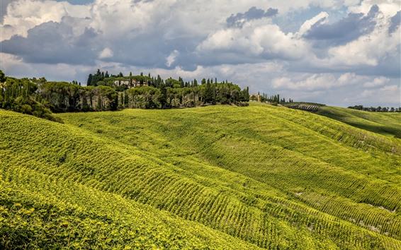 壁紙 イタリア、トスカーナ、木、緑の野原、雲