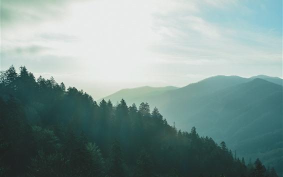 Papéis de Parede Montanhas, nevoeiro, manhã, cenário da natureza