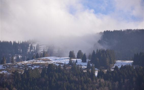 Wallpaper Mountains, trees, snow, fog, winter