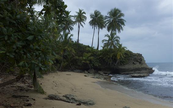 壁紙 ヤシの木、ビーチ、海、岩、雲