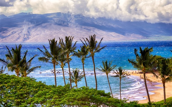 壁紙 ヤシの木、海、ビーチ、人々、雲、熱帯