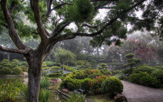 壁紙 公園、木、茂み、霧