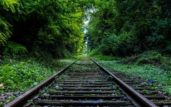 Fond d'écran Chemin de fer, arbres, vert, canal