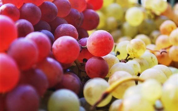배경 화면 빨간색과 초록색 포도, 과일 클로즈업
