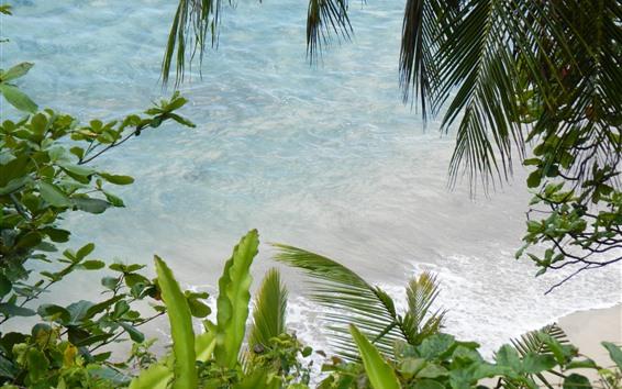Papéis de Parede Mar, folhas de palmeira, plantas, praia, tropical