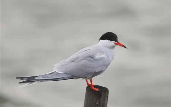 Wallpaper Seagull, stump, bird