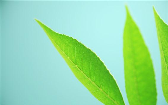 Обои Некоторые зеленые листья крупным планом