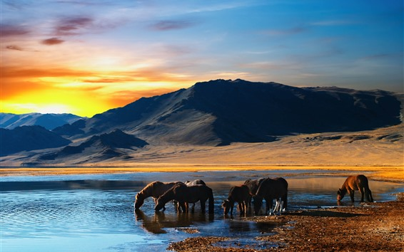 Wallpaper Some horse drink water, lake, mountains