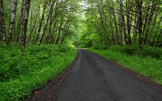 Fondos de pantalla Primavera, árboles, verde, camino