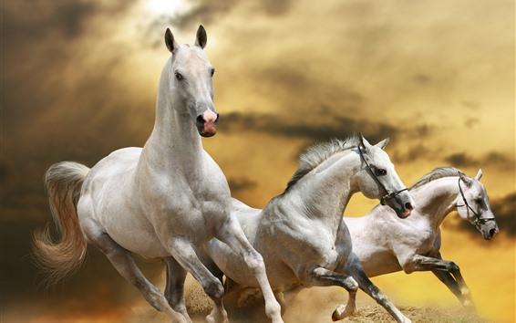 Обои Три лошади бегут, скорость