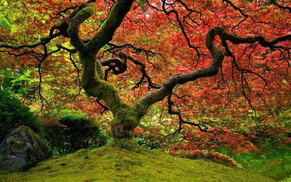 Wallpaper Tree, moss, red leaves, autumn