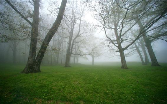 Wallpaper Trees, green grass, meadow, morning, fog