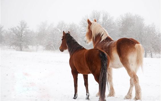 Обои Две лошади зимой, снег, вид сзади