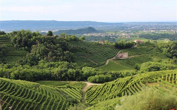 壁紙 村、田舎、植物、緑、山、家、イタリア、トレビソ