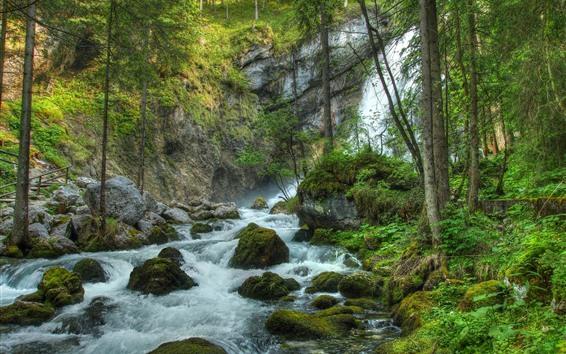 Обои Водопады, камни, деревья, мох