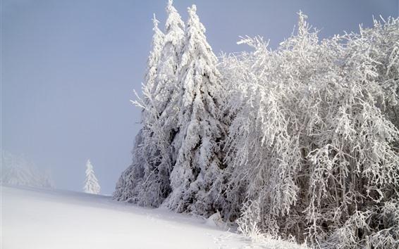 Wallpaper White snow, trees, winter