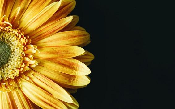 Papéis de Parede Girassol amarelo, pétalas, fundo preto