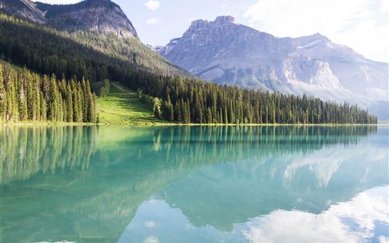 Papéis de Parede Canadá, lago peyto, floresta, árvores, montanhas, reflexão água