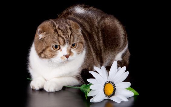 Обои Кот и белый цветок