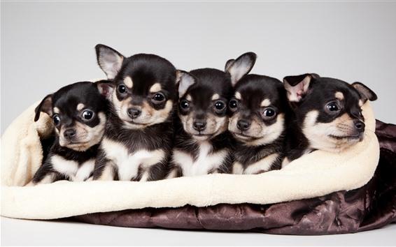 Papéis de Parede Filhotes de cachorro bonitos cinco