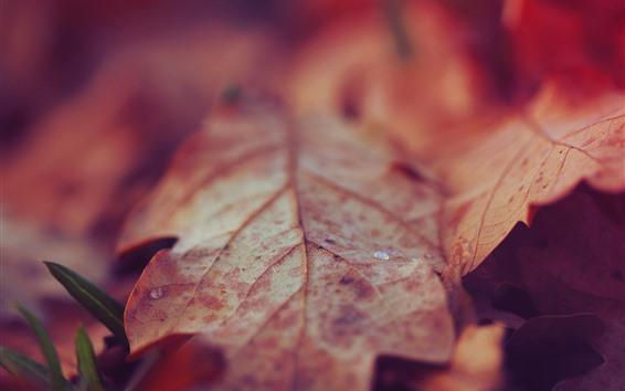 Papéis de Parede Folhas secas, gotas de água, outono