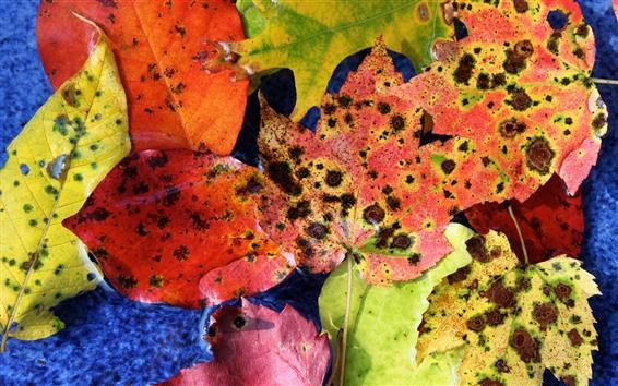 Обои Опавшие листья, пятна, осень