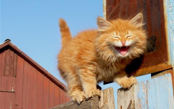 배경 화면 솜 털 고양이, 하품, 울타리