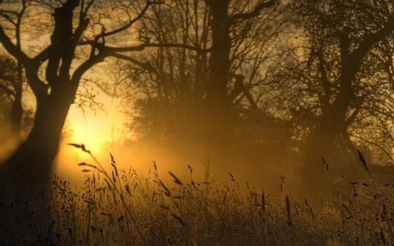 Обои Трава, утро, восход, туман, лето