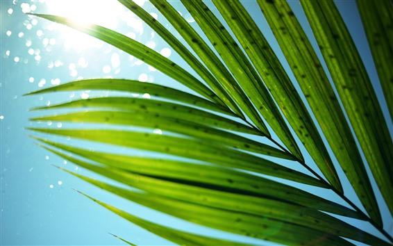 Обои Зеленая трава листья, небо, сияние, блики