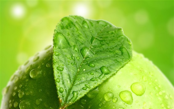 Wallpaper Green leaf and green apple, water droplets