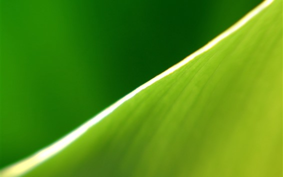 Wallpaper Green leaf macro photography, half