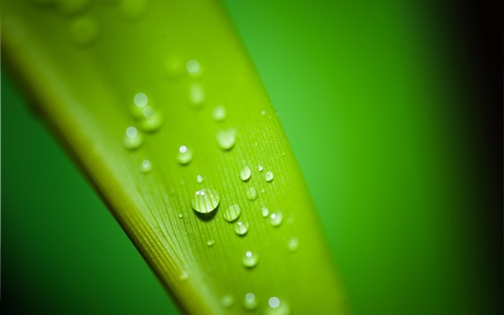 Обои Макросъемка зеленых листьев, капли воды, роса