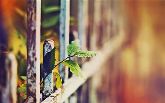 Обои Зеленые листья, забор, дымка