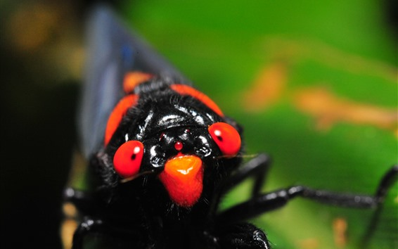 Wallpaper Insect close-up, head, eyes