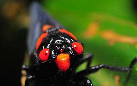 壁紙 昆虫のクローズアップ、頭、目