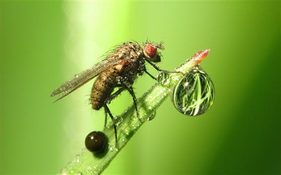 Papéis de Parede Inseto, mosca, gotas de água